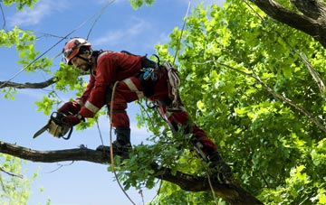 find trusted rated Isle Of Wight tree surgeons