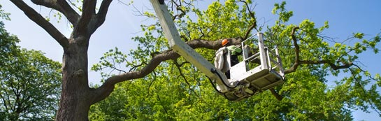 Isle Of Wight tree surgery services