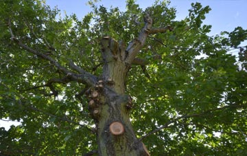 what is Isle Of Wight tree surgery?